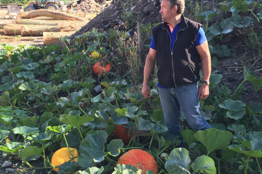 Potirons : Le retraitement des déchets chez Hugues Léger